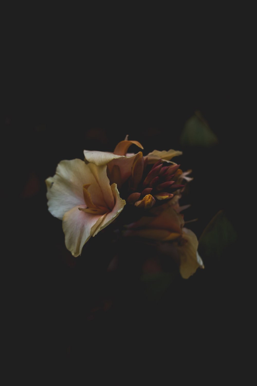 Moody Botanicals8.jpg