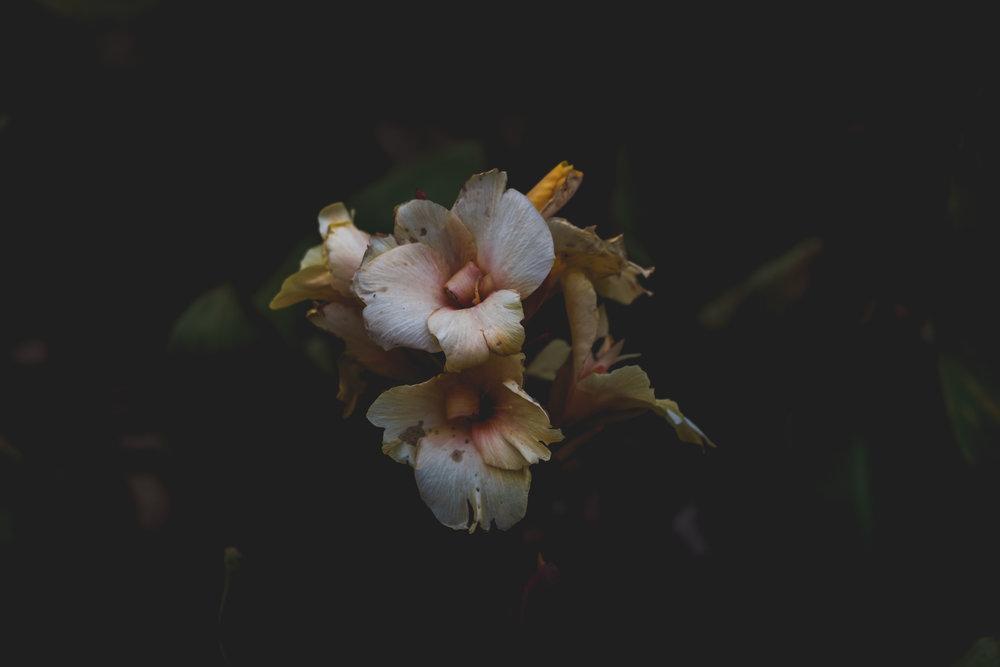 Moody Botanicals6.jpg