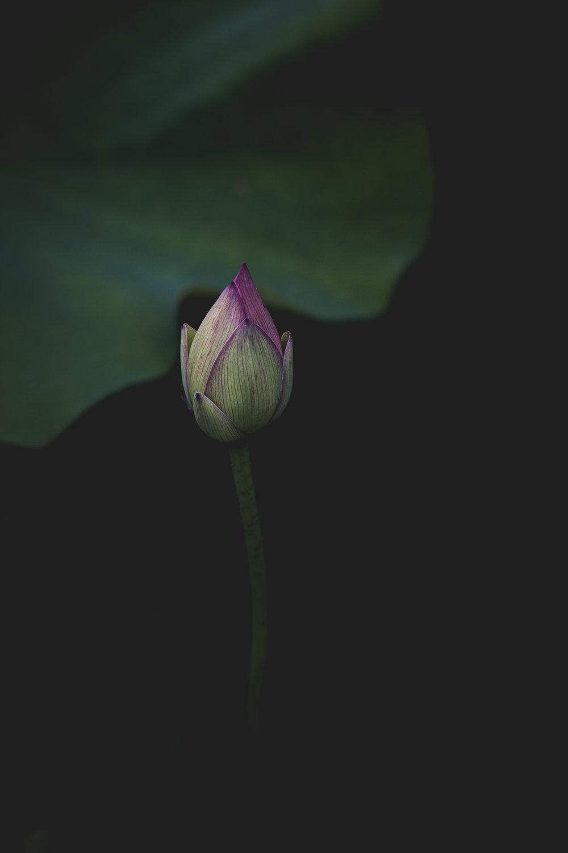 Moody Botanicals5.jpg