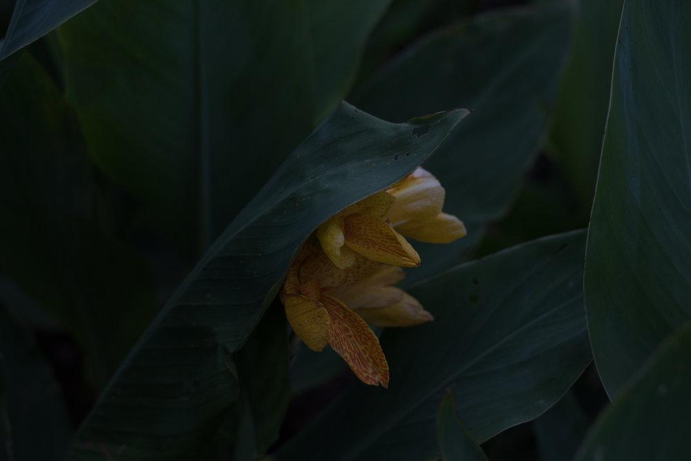 before-botanical-edit