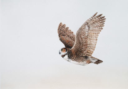 Aloft-Great Horned Owl.JPG