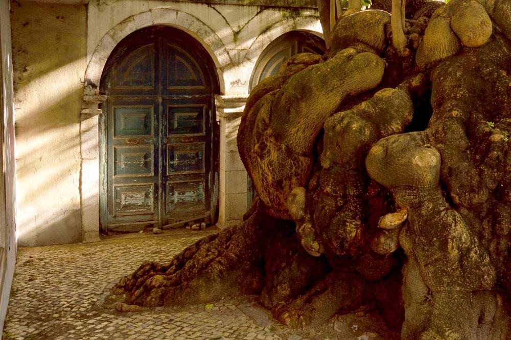 The Hidden Door.jpg