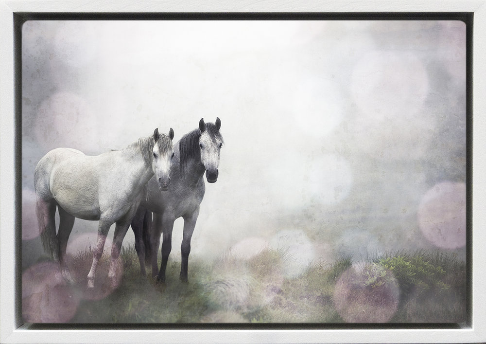 Two Horses in the Mist.jpg