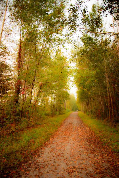 Jerome Maggiore-Autumn Path.jpg