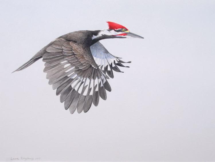 2+Pileated+Woodpecker+WC+2015.jpg