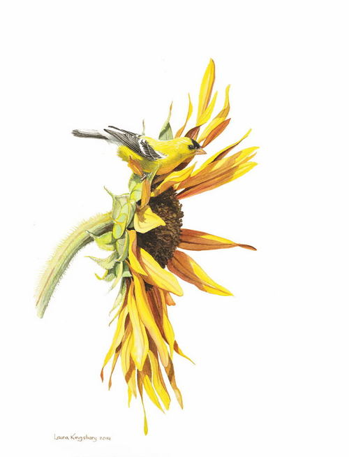 9+Sunflowers+WC2014.jpg