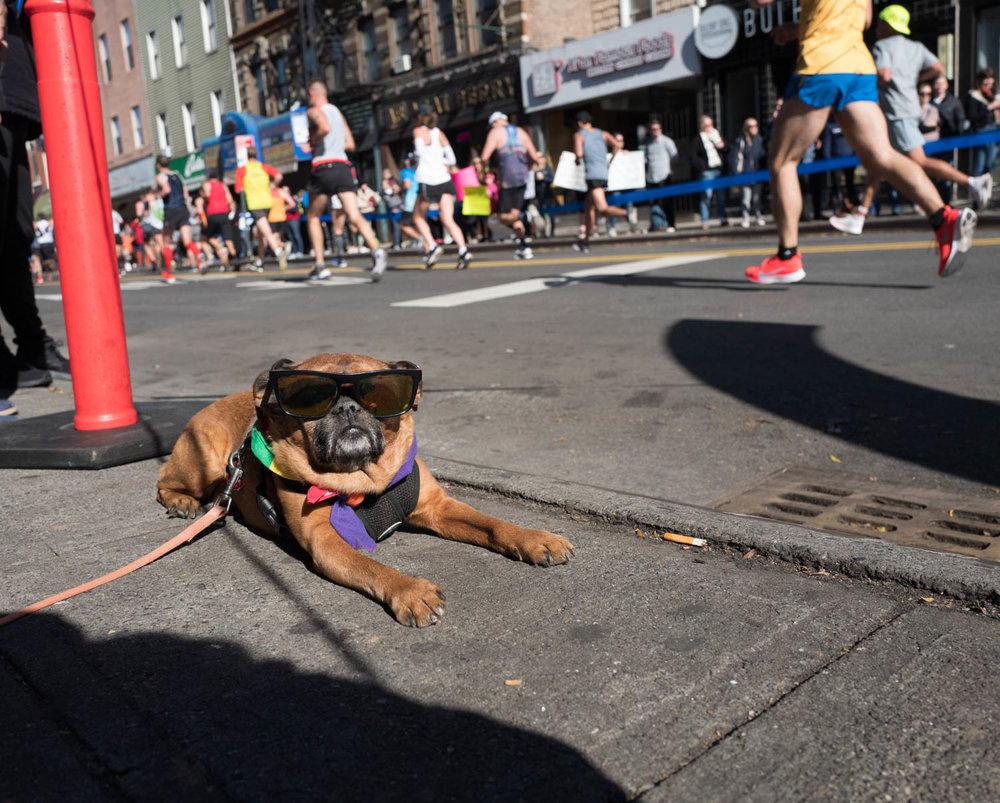 Diana McClure Marathon.jpg