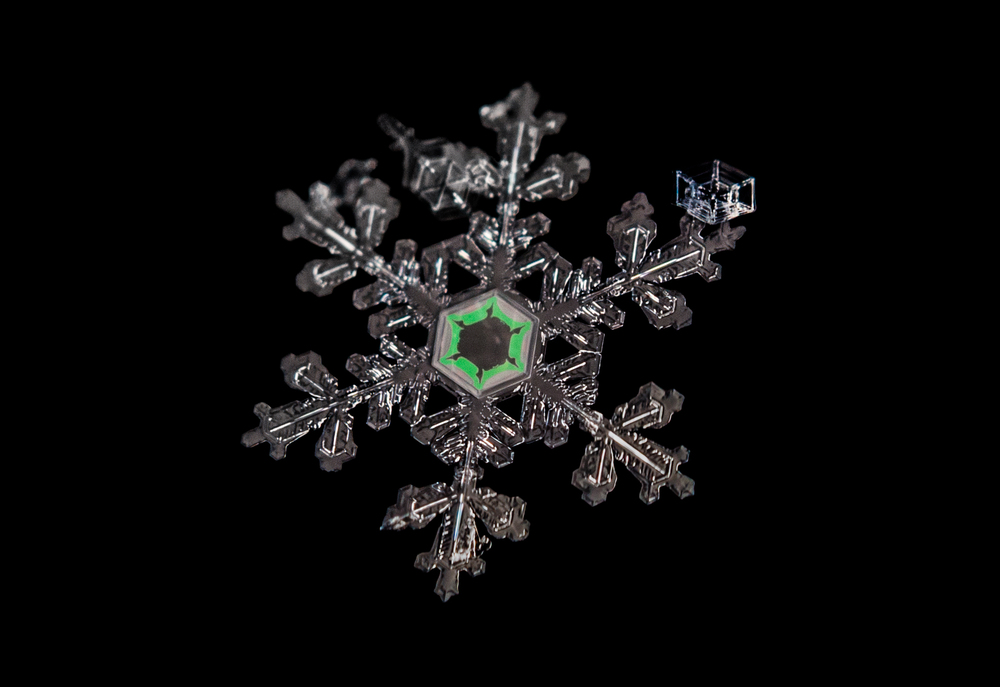 Snowflake Nº 7 Nikon D750 ISO 500 50mm Reversed with Extension Tubes f/11 1/100 sec