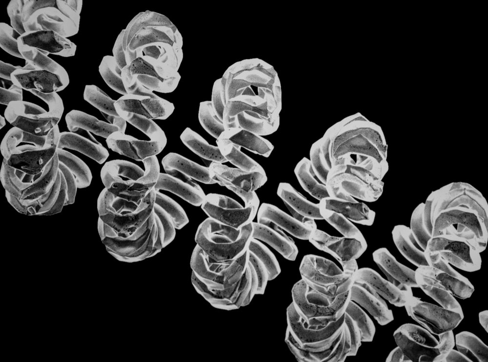 Micro-Filament from a Light Bulb at 500 microns
