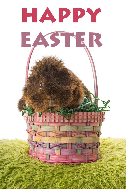 Wilbur Happy Easter