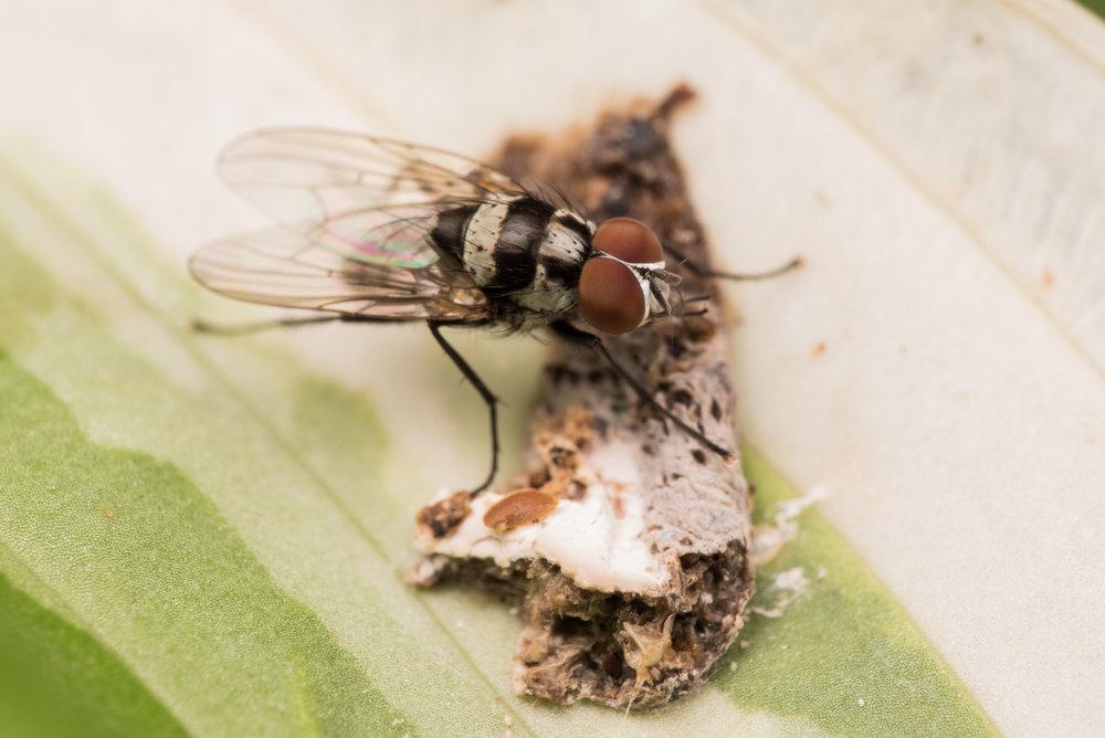Fly (Identification?)