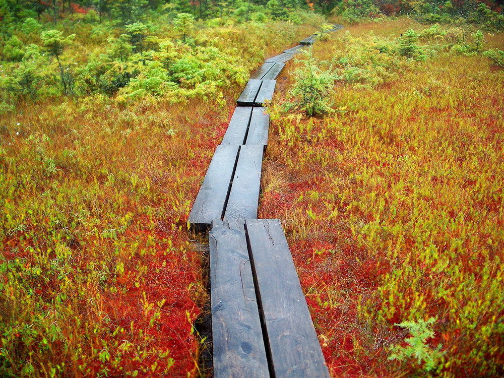 Raised walkway on bog. Photo credit/source: mwms1916 /flikr