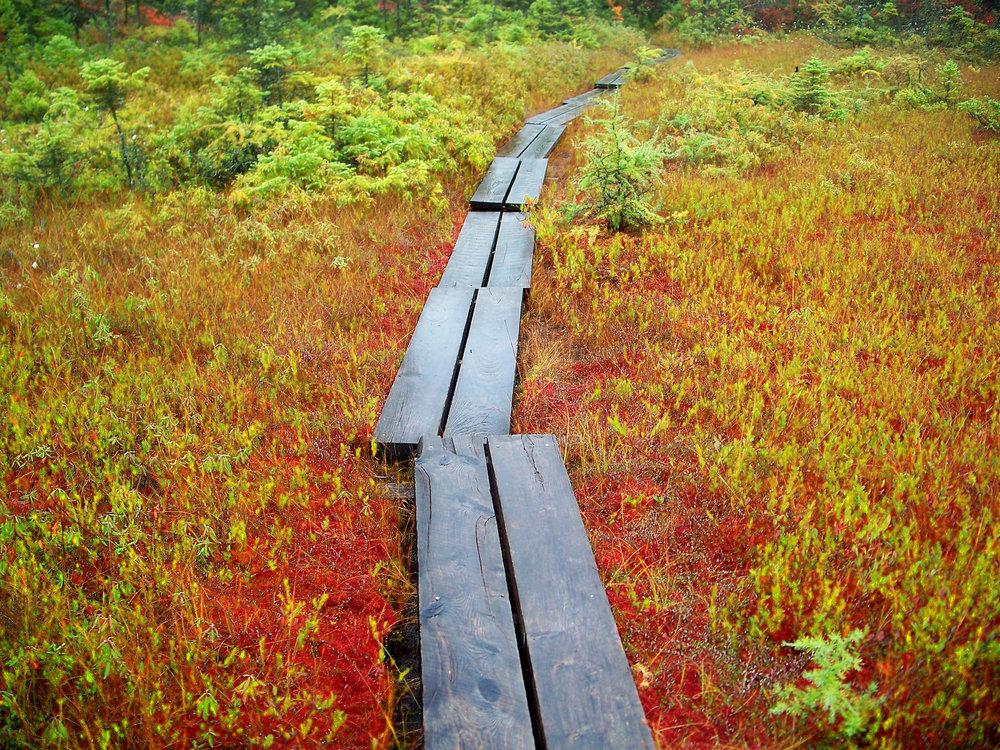 Raised walkway on bog. Photo credit/source: mwms1916 /flikr