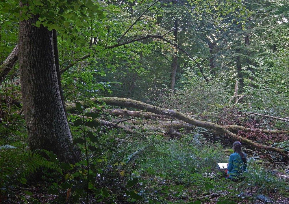 Lady Park Wood Image 1.jpg