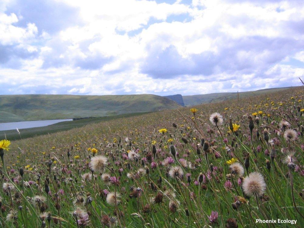 M Hayes 3 General Elan meadow view (002).jpg