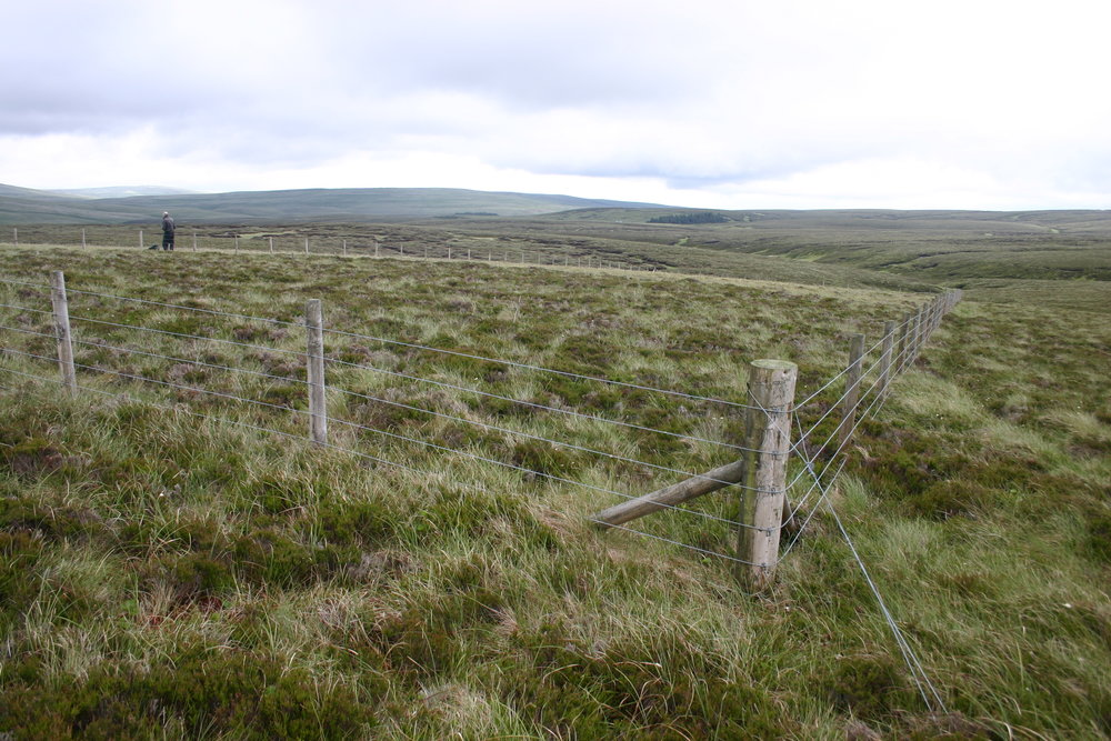 burning/grazing plot at the moor house long-term experiment on hard hill, northern pennines
