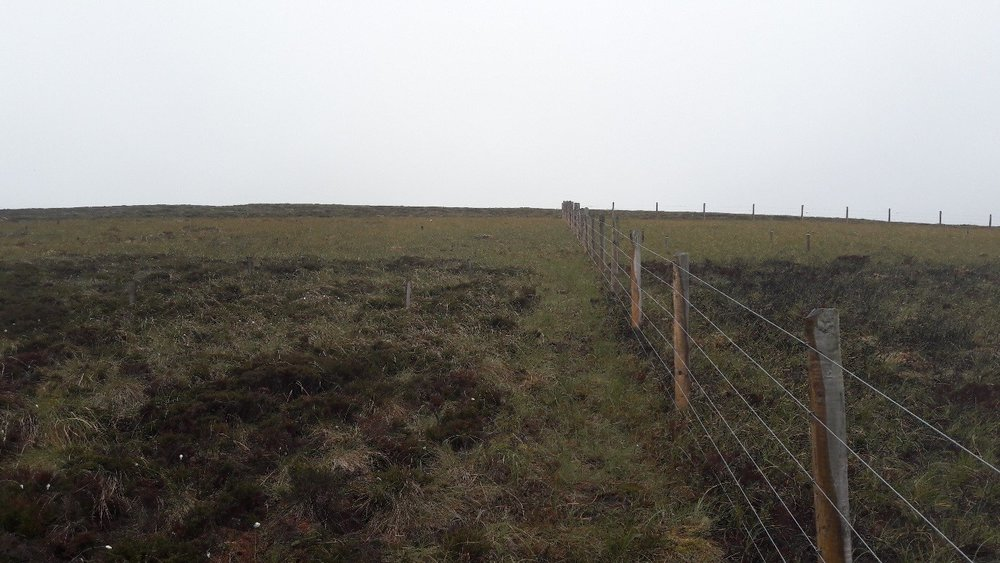 fencing prevents free-ranging sheep from accessing control plots at moor house