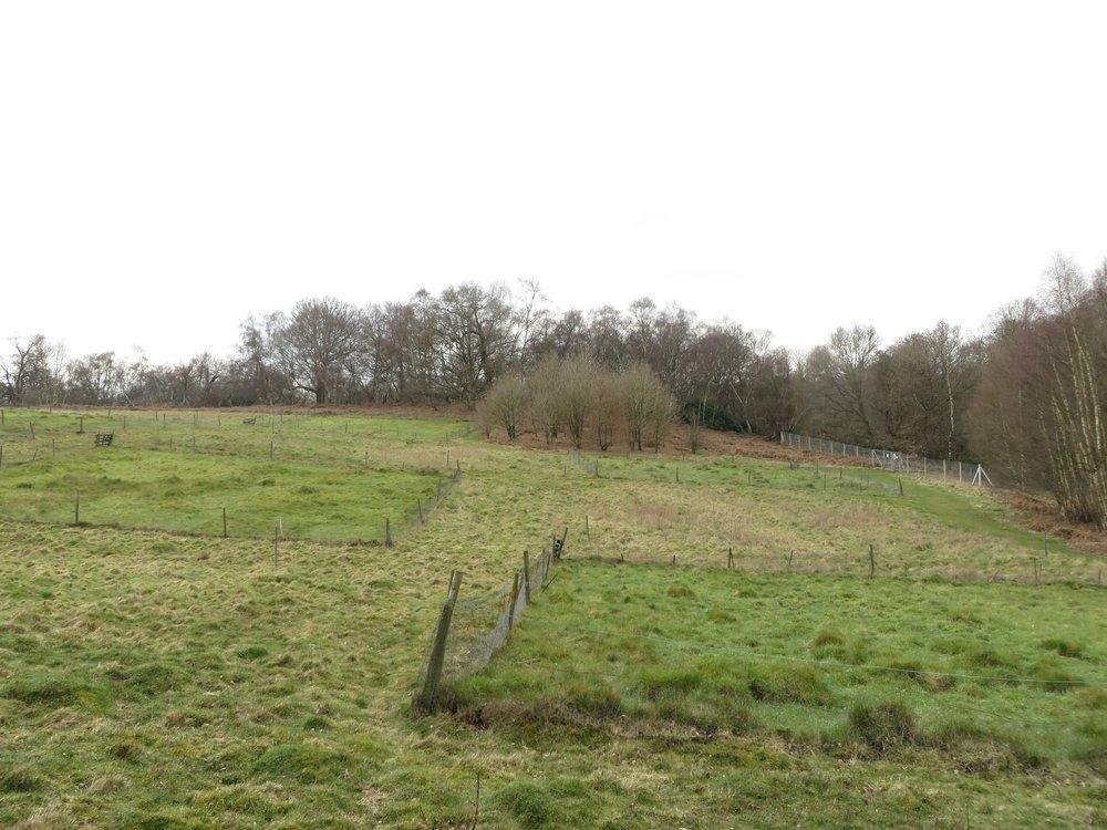 Nash's Field Feb 2016.jpg