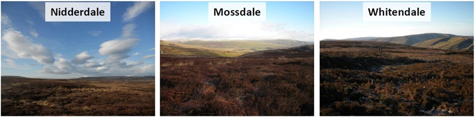 ground-level images taken winter 2012, showing dominance of heather & sedge (chiefly cottongrass)