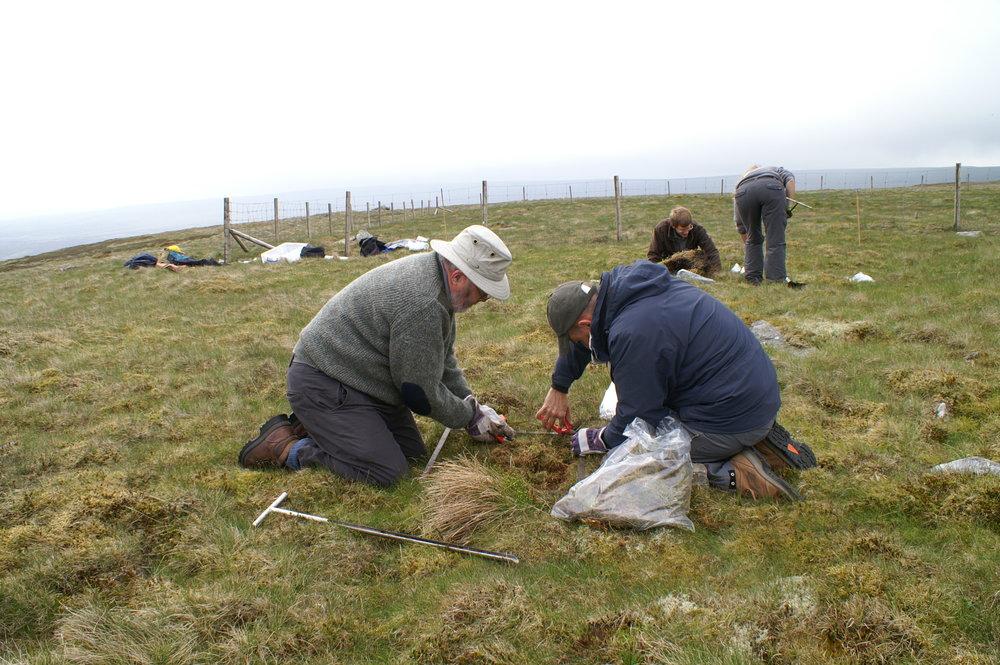 Sampling Control Area Moor House Rewilding Plot.JPG