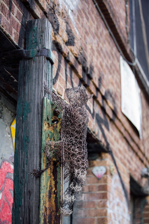 Raccoon three quater .jpg