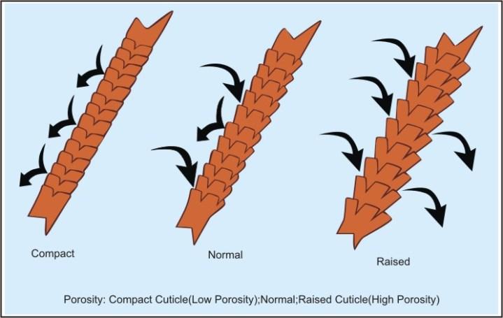 cuticle-hair