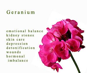 geranium-