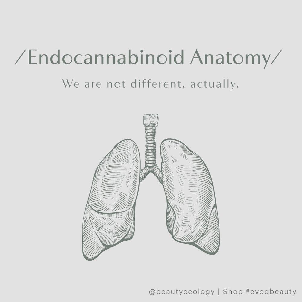 354281_AnatomyCards_IG1_011619.jpg