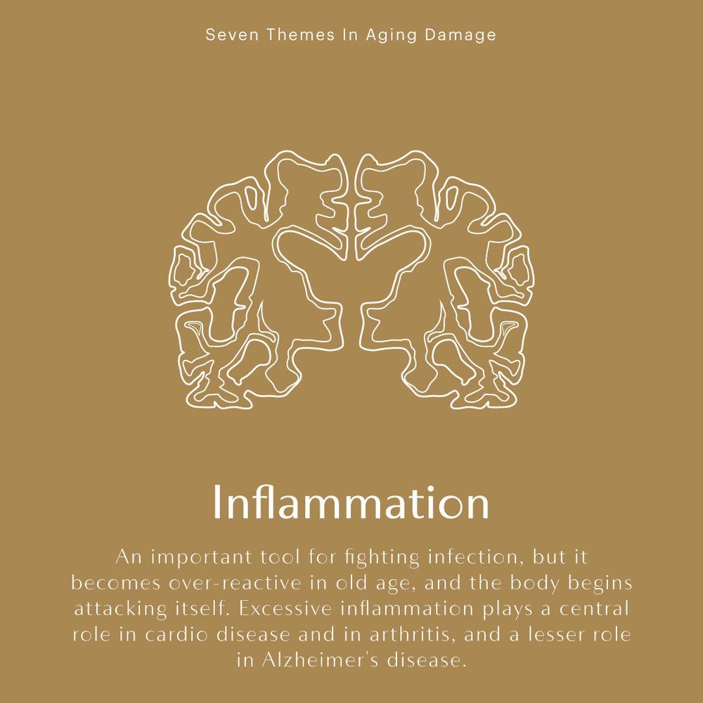 394143_IGStories_Set2_Inflammation_032019.jpg
