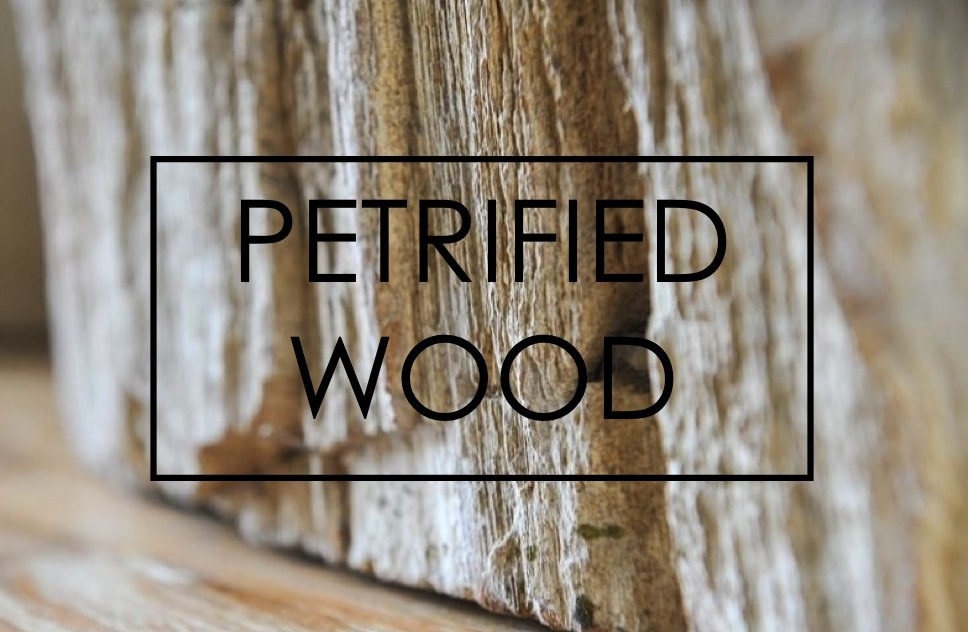 PETRIFIED WOOD.jpg