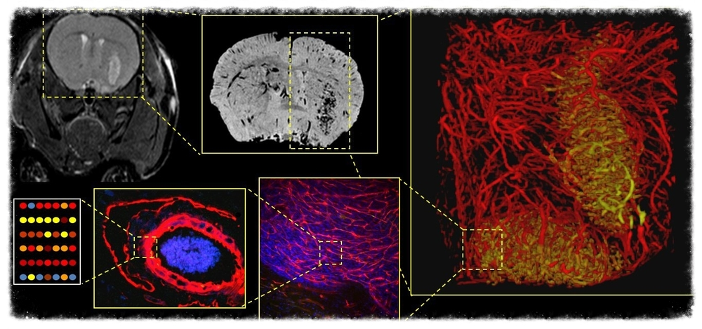 Multiscale imaging for image-based systems biology and phenotyping [ Link to paper ].