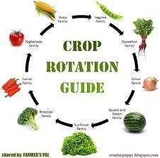 CropRotationGuide.jpg