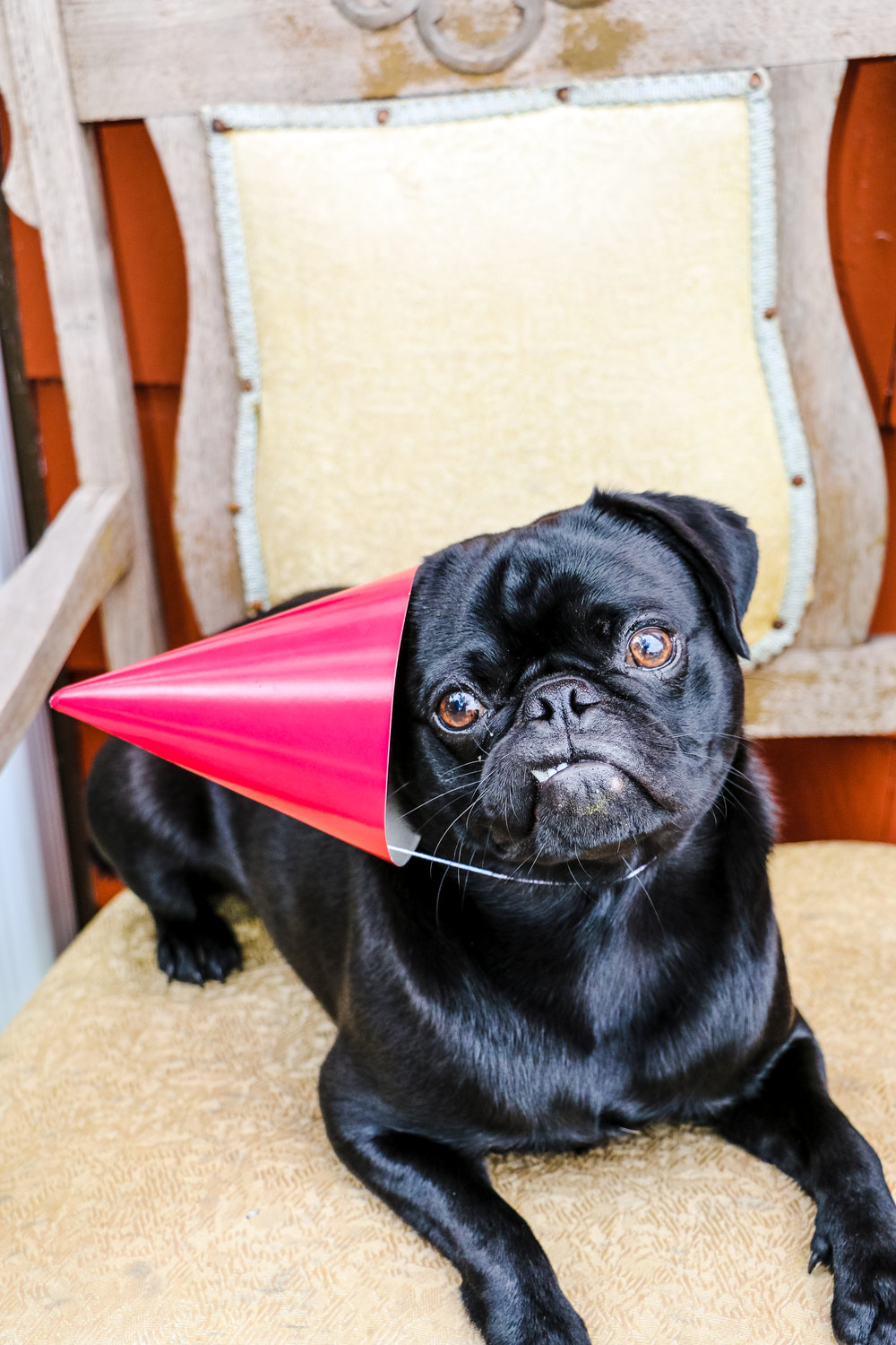 and yeah...i know...this the pug not the blog...but the blog is shy and won't wear the damn party hat.