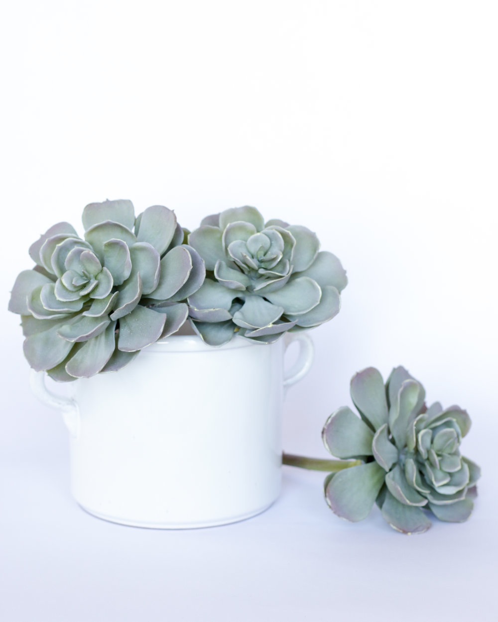 Succulent with Stem — Spruce, LLC