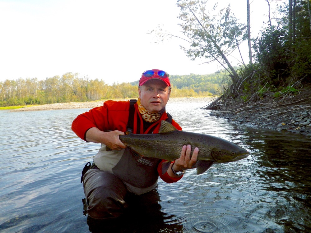 Tom Harkness put one back to swim on the Petite Cascapedia, Nice fish Tom!