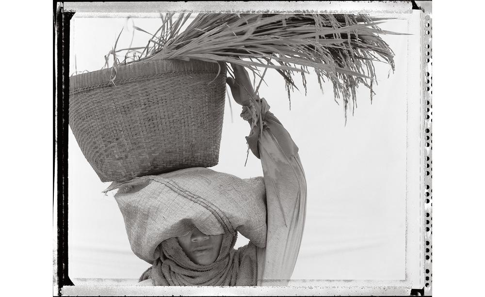 Rice-Head.jpg