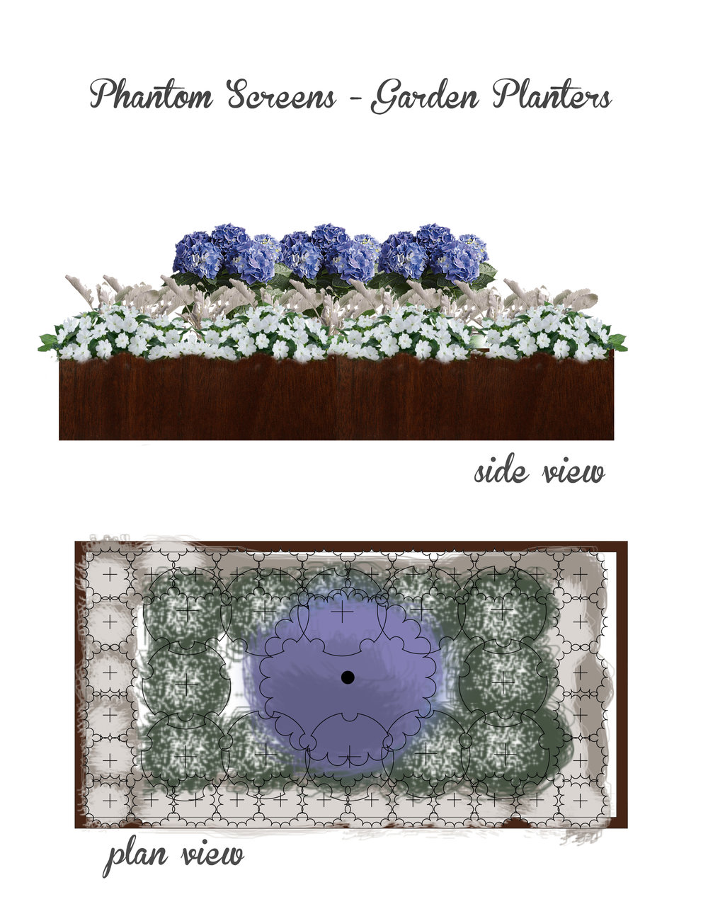 Digital design board for DeWolde Residence raised planters. Hydrangea (center) surrounded by white impatiens and Dichondra 'Silver Falls' spilling over the edges.