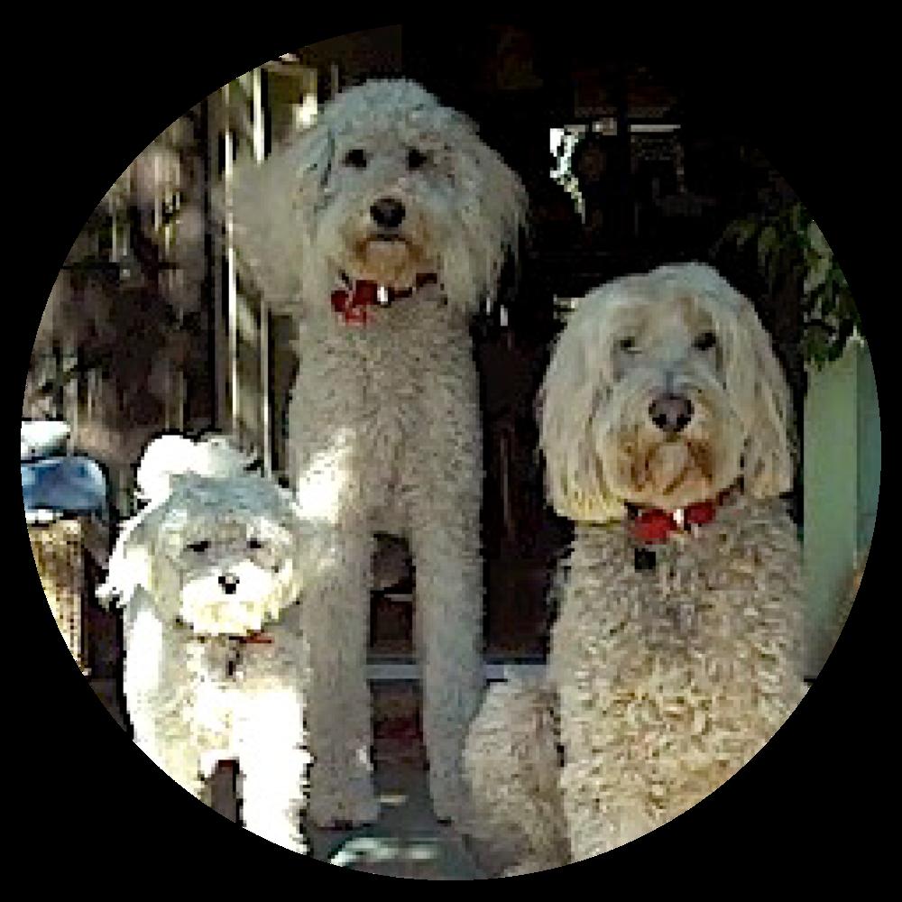 The Kids of MarioSiART_Murphy Woofie Howie.png