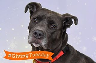 We love animals here at Rocco & Lola. Today is #GivingTuesday so we're donating 100% of the proceeds from every jar sold to @ASPCA's efforts to end animal cruelty & homelessness. Get delicious #grainfree breading & give an animal a second chance! #eatroccoandlola #paleo #aspca #rescuedogsofinstagram a.co/49guGyJ