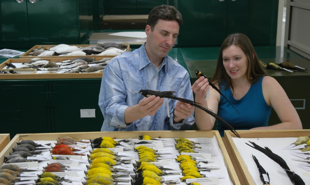 With my PhD advisor, Chris Witt, in the Museum of Southwestern Biology collection examining some of the specimens used in our study on genome size evolution.