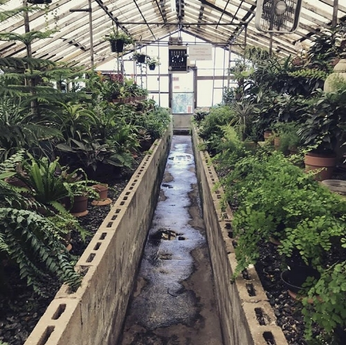 My favorite greenhouse in town:  Campbell's Nursery in SouthEnd