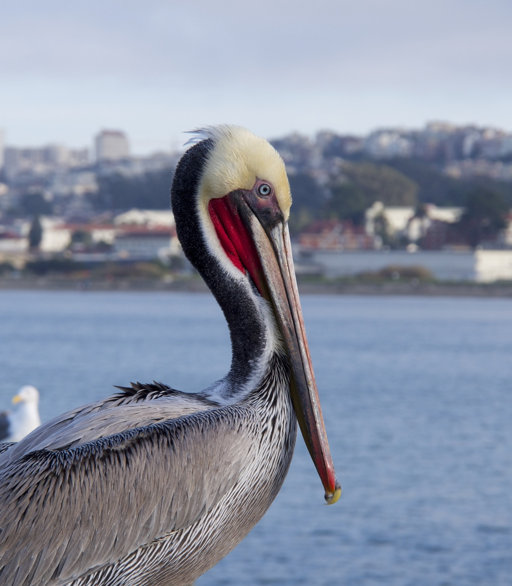 I've been told all good blog posts include an image… so here's a cool one I took a few weeks back of a Pelican.