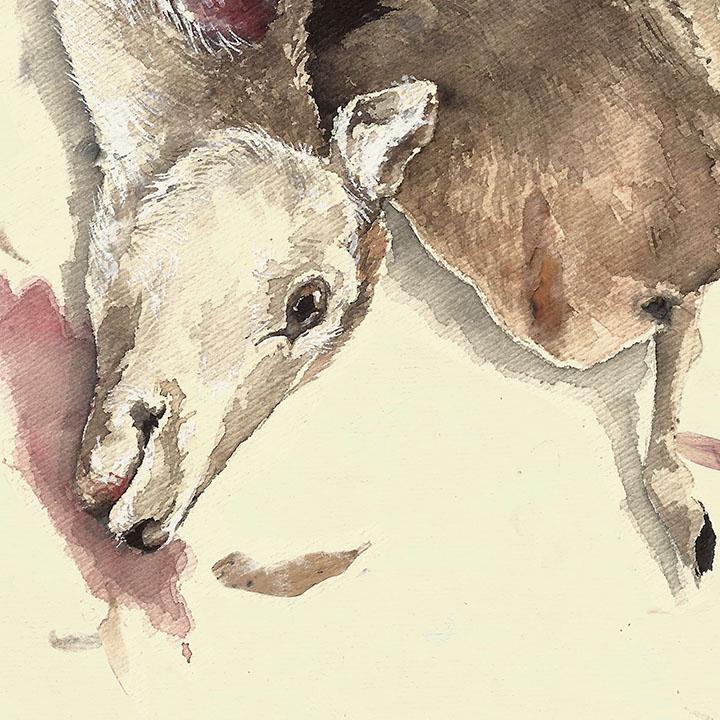 deer doe // mandy anselmo // web - instagram