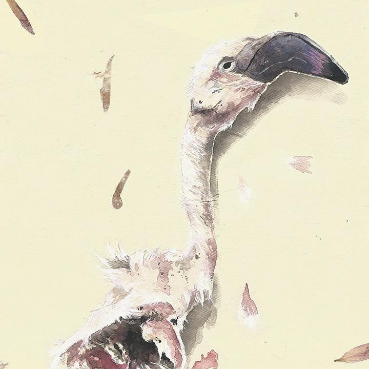 expresos flamingo // mandy anselmo // web - instagram