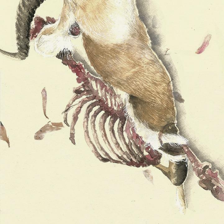 honking antelope // mandy anselmo // web - instagram