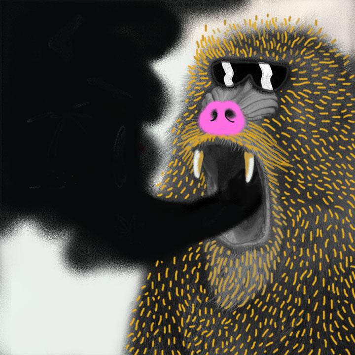 gorila // iván silva // instagram