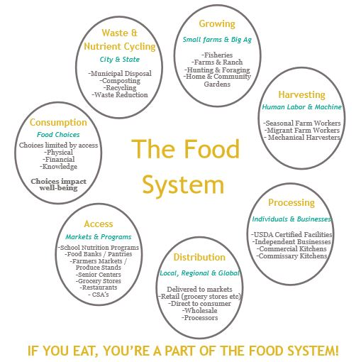 thefoodsystem