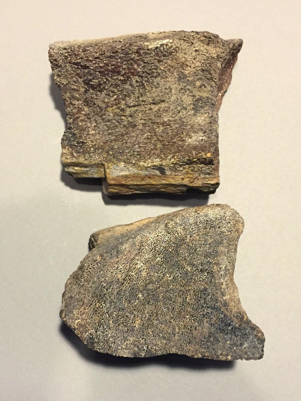 Vertebrata (Reptilia)  Dinosaur bone fragment from a Brontosaurus, from the upper Jurassic period (150 million years)