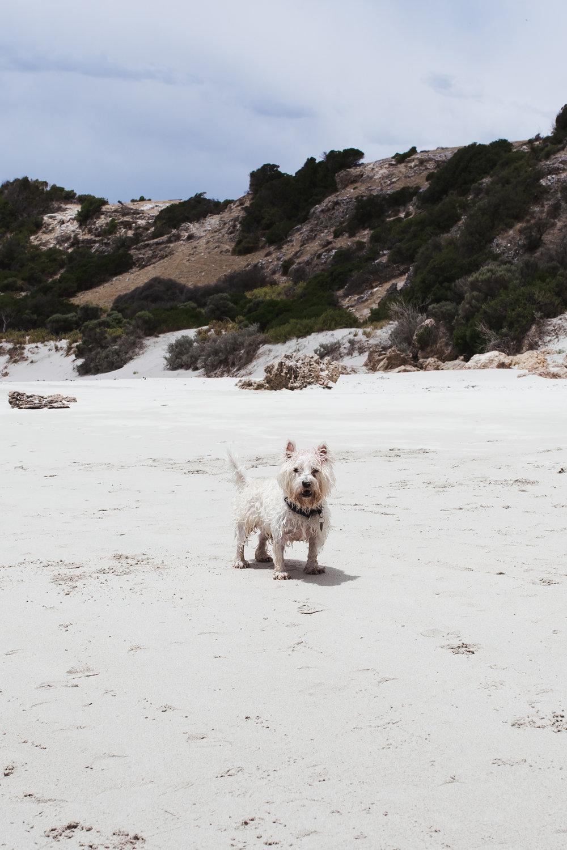 Stokes beach  (17 of 51).jpg