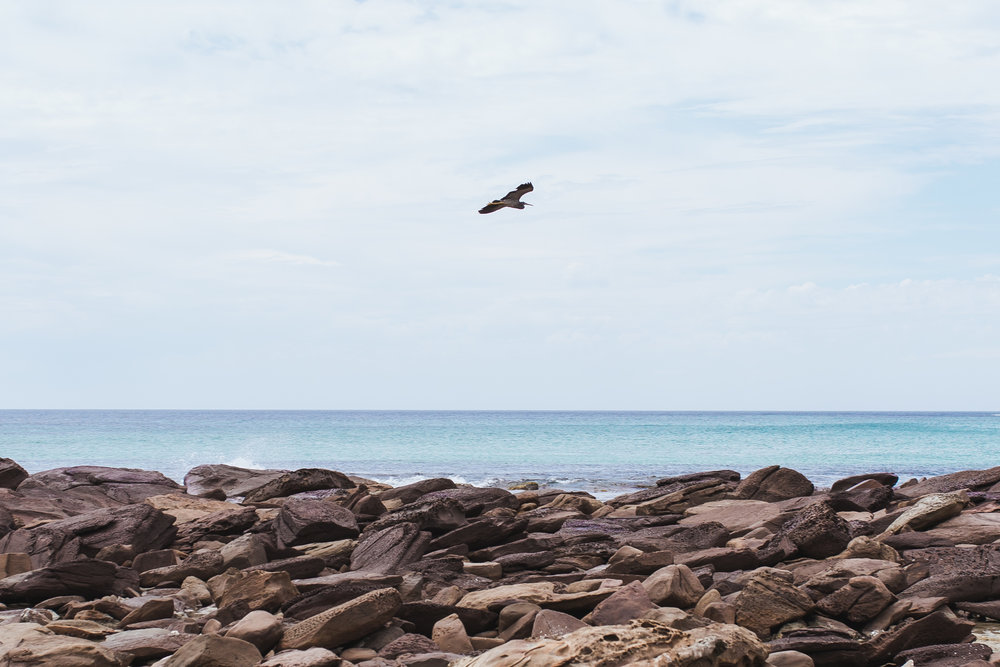 Stokes beach  (32 of 51).jpg